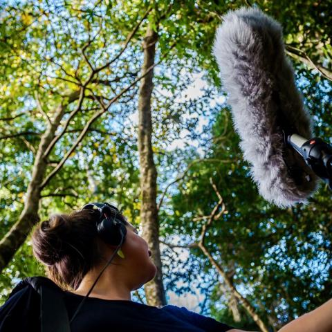 Recording sounds in Noosa Biosphere Reserve (Creative Responses to Sustainability Australia Guide)