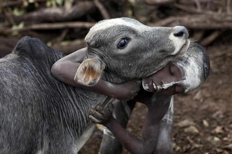 Suru boy with Zebu calf.