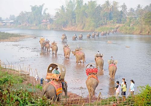 elephants-laos-2