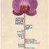 Across Asia Film Festival
